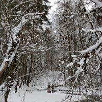в зимнем лесу :: Валентина. .