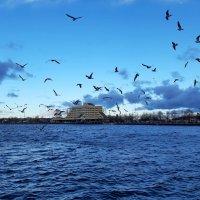 Чайки на заливе :: Светлана Петошина