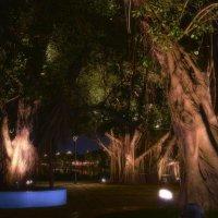 Таинственный сад. :: Андрий Майковский