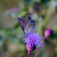 опять про бабочек  1 :: Александр Прокудин