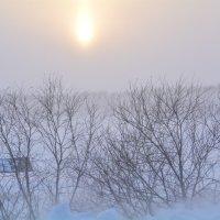 Зимняя вьюга :: Ольга Хорьякова