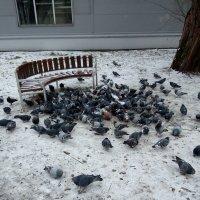 Стая голубей в нашем дворе. :: Светлана Калмыкова