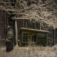 зима :: Геннадий Свистов