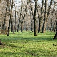 """Зимний"" день в парке. :: barsuk lesnoi"