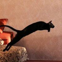 Летучая кошка :: Irene Irene