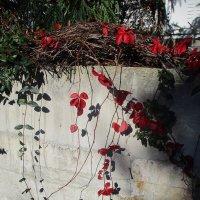 Цветы в январе..Турция.. :: Зинаида