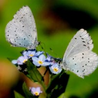 опять про бабочек 12 :: Александр Прокудин
