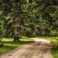 В альпийском лесу :: Alexander Andronik