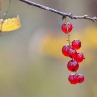 Этюд из осеннего леса :: Татьяна Соловьева