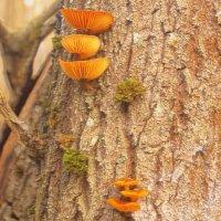Январь.... Пошли грибы..... :: владимир володёнок
