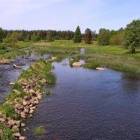 Тихий летний денёчек у реки... :: Татьянка *