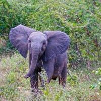 Слонёнок вдоволь наигрался, в грязной луже повалялся. :: Андрей Иванович (Aivanovich-2009)
