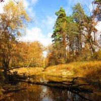 На осенней реке :: Андрей Снегерёв