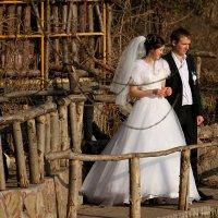 Зимняя свадьба. :: barsuk lesnoi