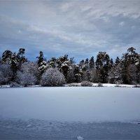 Зимы ждала, ждала природа. Снег выпал только в январе... :: Ольга Русанова (olg-rusanowa2010)