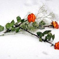 Розы на снегу :: Ольга Довженко
