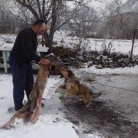 Битва собаки с волками шерстью. :: Паш Папикян
