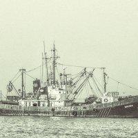 Берег Азовского моря. :: Андрей