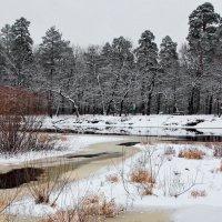 Удивилось снегу зимнее тепло... :: Лесо-Вед (Баранов)