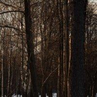 Там на неведомой лыжне... :: Алексей Медведев