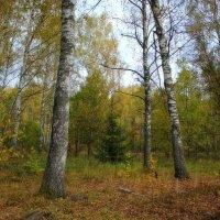 В осеннем лесу... :: марк