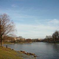 Редкий солнечный и морозный день :: Вера Щукина