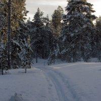 Лыжня в лесу. :: Галина Полина