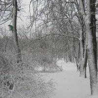 Просто наступила зима... :: Галина
