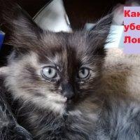 котик :: Вероника Камилова