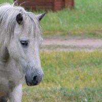 Маленькая лошадка :: Valera Solo
