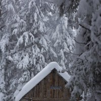 Зимовье :: Nataliya Belova