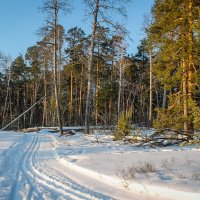 """Ах, февраль! Каков затейник! Лижут снег деревьев тени,.."" (Заигралина М.) :: Надежда"