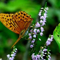 опять про бабочек 47 :: Александр Прокудин