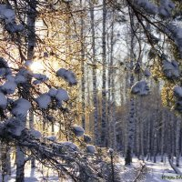 Осваивает солнышко февраль... :: Лесо-Вед (Баранов)