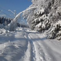Снежная и замороженная :: Вероника Камилова