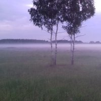 Вечер. Туман :: Вероника Камилова