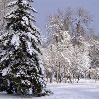 Зима и солнце... :: Татьяна Евдокимова