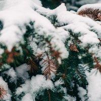 Елка в снегу :: Артем Герасименко