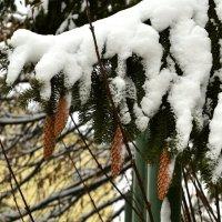 Зима :: Valera Solo