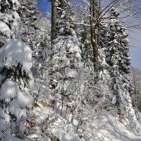 Зимние прогулки :: tamara *****
