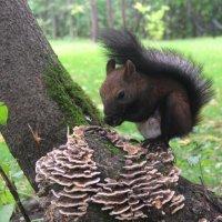 На лесных тропинках :: владимир тимошенко