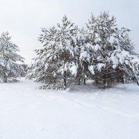 В тишине лесной :: Денис Бочкарёв