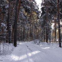 Избежал февраль в лесу бесснежья... :: Лесо-Вед (Баранов)