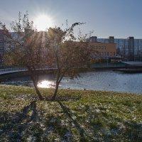 Солнечное настроение :: Валентина Харламова