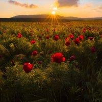 Скоро весна :: Фёдор. Лашков