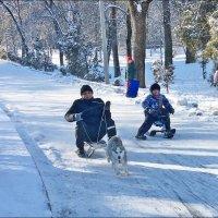 Три дня зимы! :: Надежда