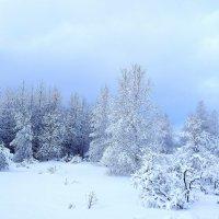 Зима. :: Наталья ***