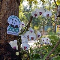 Зоопарк в Чианг Мае. Таиланд. :: Alex