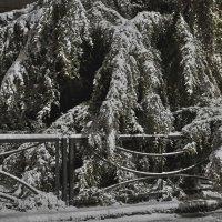 В снегу :: Константин Бобинский
