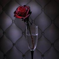 Роза :: Irene Irene